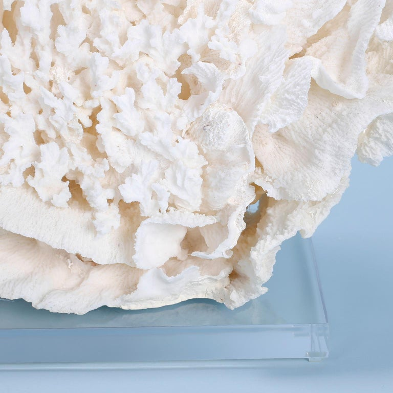 Large Coral Sculpture on Lucite In Good Condition For Sale In Palm Beach, FL