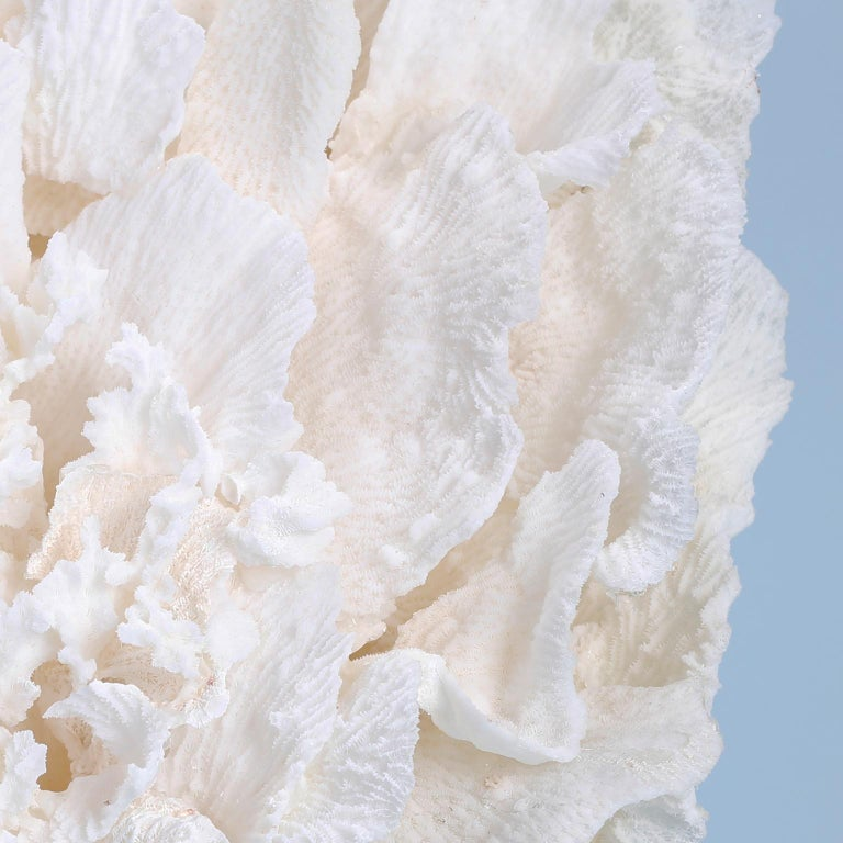 Contemporary Large Coral Sculpture on Lucite For Sale