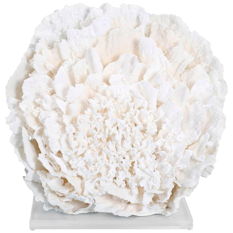 Large Coral Sculpture on Lucite For Sale