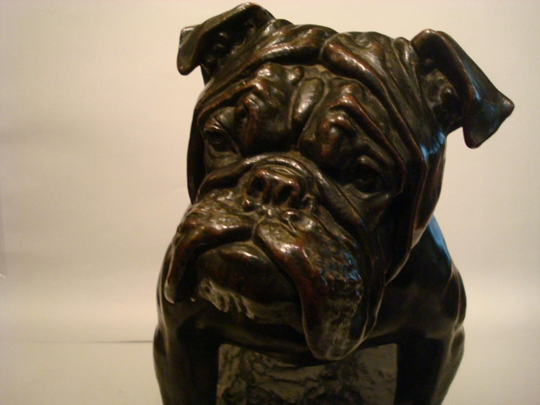 Large Dog English Bulldog Bronze Sculpture, Fritz Diller, Germany, 1910 For Sale 4
