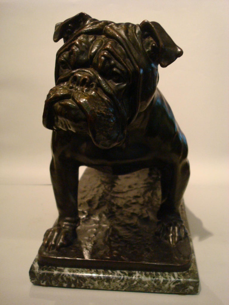Large Dog English Bulldog Bronze Sculpture, Fritz Diller, Germany, 1910 For Sale 5