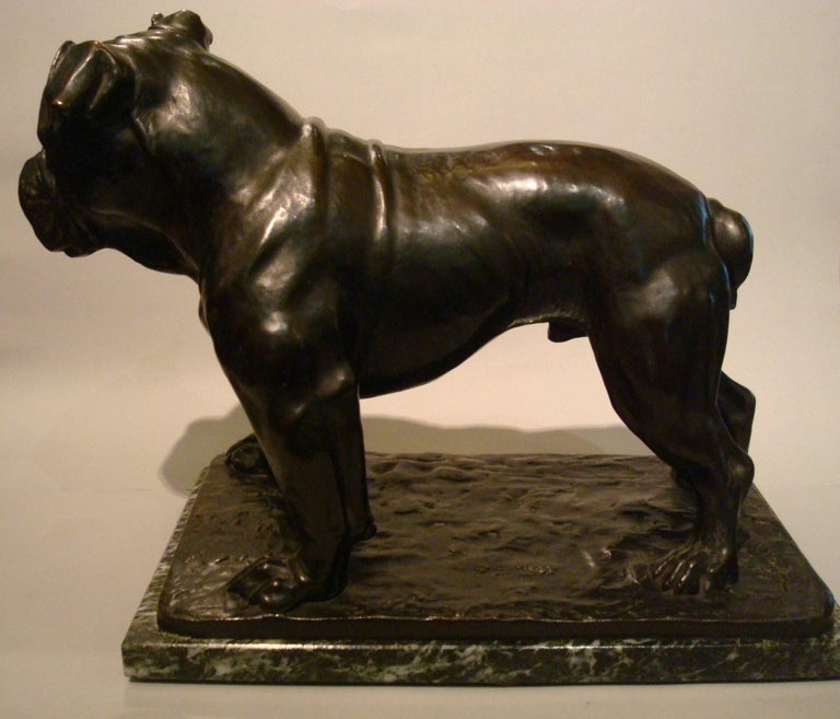 Large Dog English Bulldog Bronze Sculpture, Fritz Diller, Germany, 1910 For Sale 8