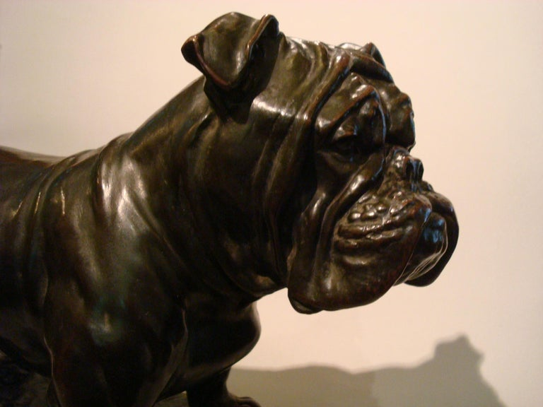 Large Dog English Bulldog Bronze Sculpture, Fritz Diller, Germany, 1910 For Sale 11