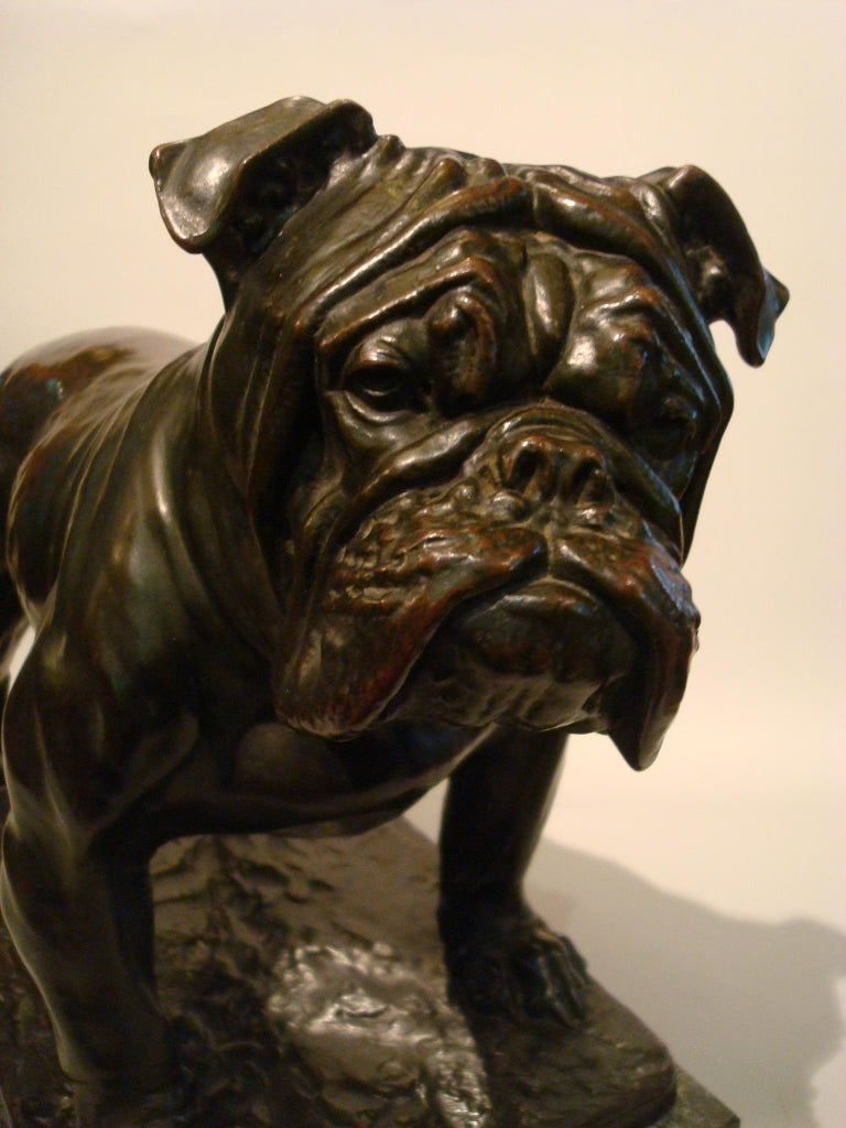Large Dog English Bulldog Bronze Sculpture, Fritz Diller, Germany, 1910 In Good Condition For Sale In Buenos Aires, Olivos