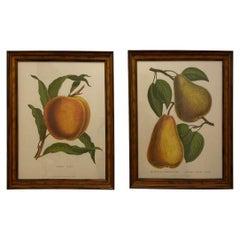 Large Framed G. Severyns Fruit Chromolithographs, a Pair