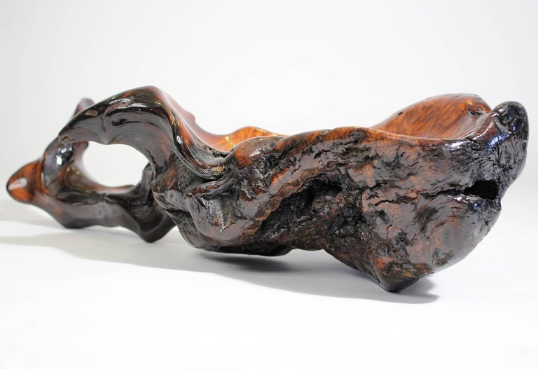 Large Free-Form Burl Root Wood Lacquered Centerpiece Bowl For Sale 1