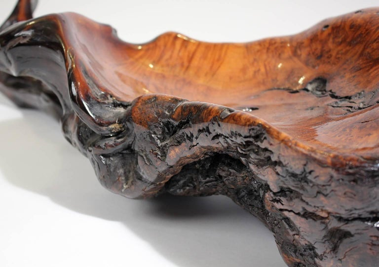 Large Free-Form Burl Root Wood Lacquered Centerpiece Bowl For Sale 2