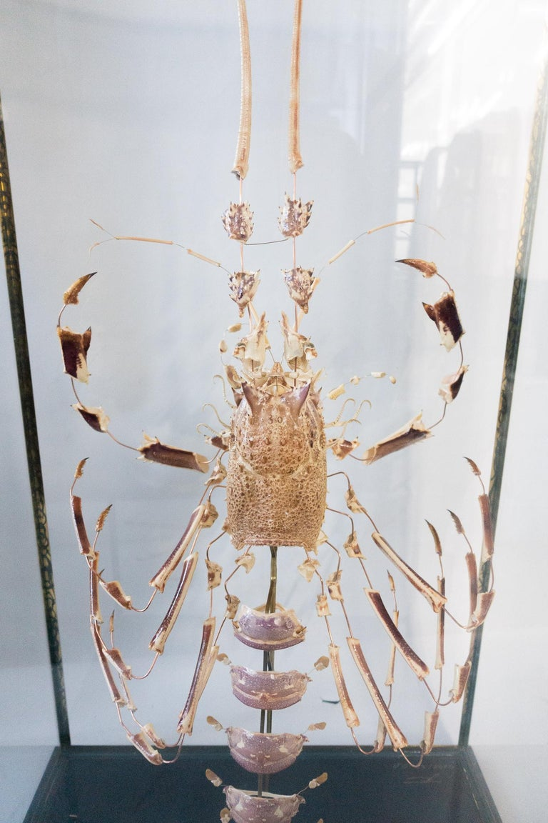 Large deconstructed clawed lobster mounted on a wooden base with a patinated brass and glass display case.