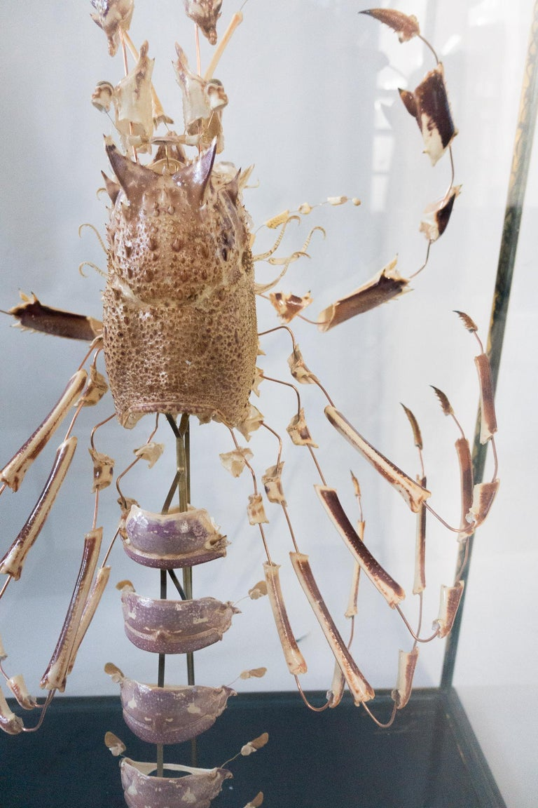 Large French Deconstructed Clawed Lobster Sculpture in a Glass and Brass Case For Sale 2