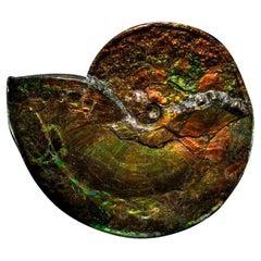 Large Iridescent Ammonite