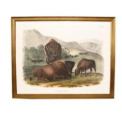Large John James Audubon Buffalo Giltwood Framed Print
