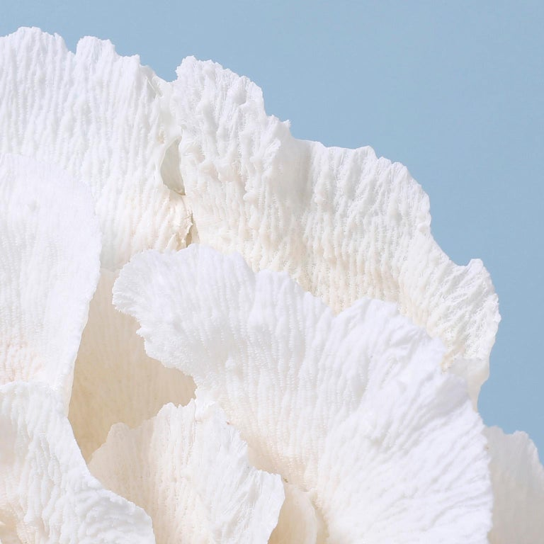 Large Merulina Coral Sculpture on Lucite For Sale 1