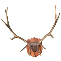Large Mounted Antlers on Wood Plaque