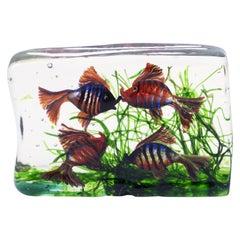Large Murano Glass Aquarium, Archimede Seguso