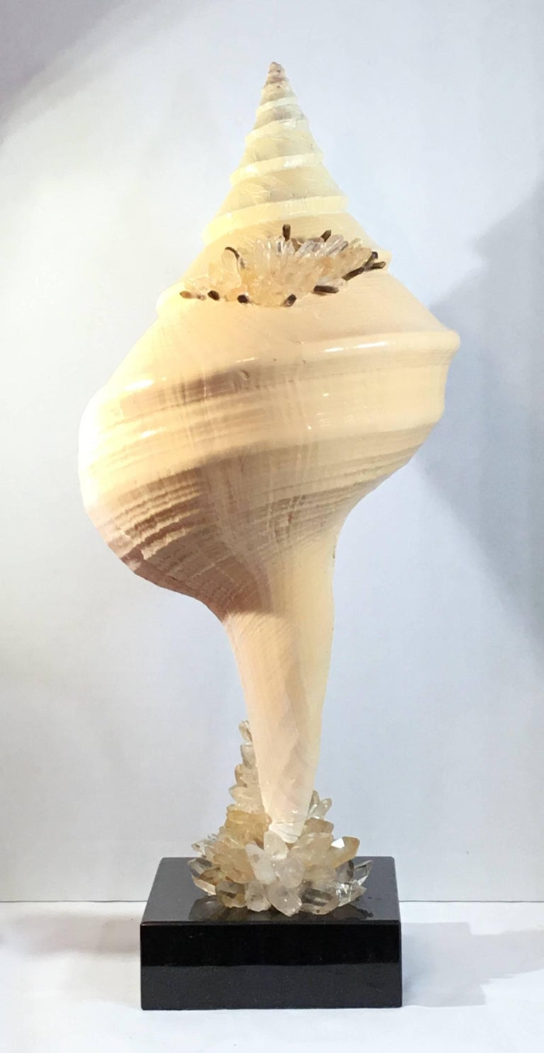 Elegant Atlantic trumpet sea shell professionally mounted on a black color marble base. Artistically hand embedded by the artist with crystal quartz pieces that make beautiful art object to display.