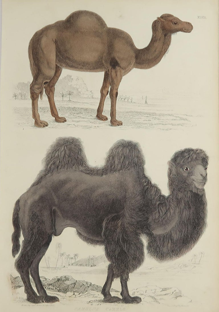 Great image of camels