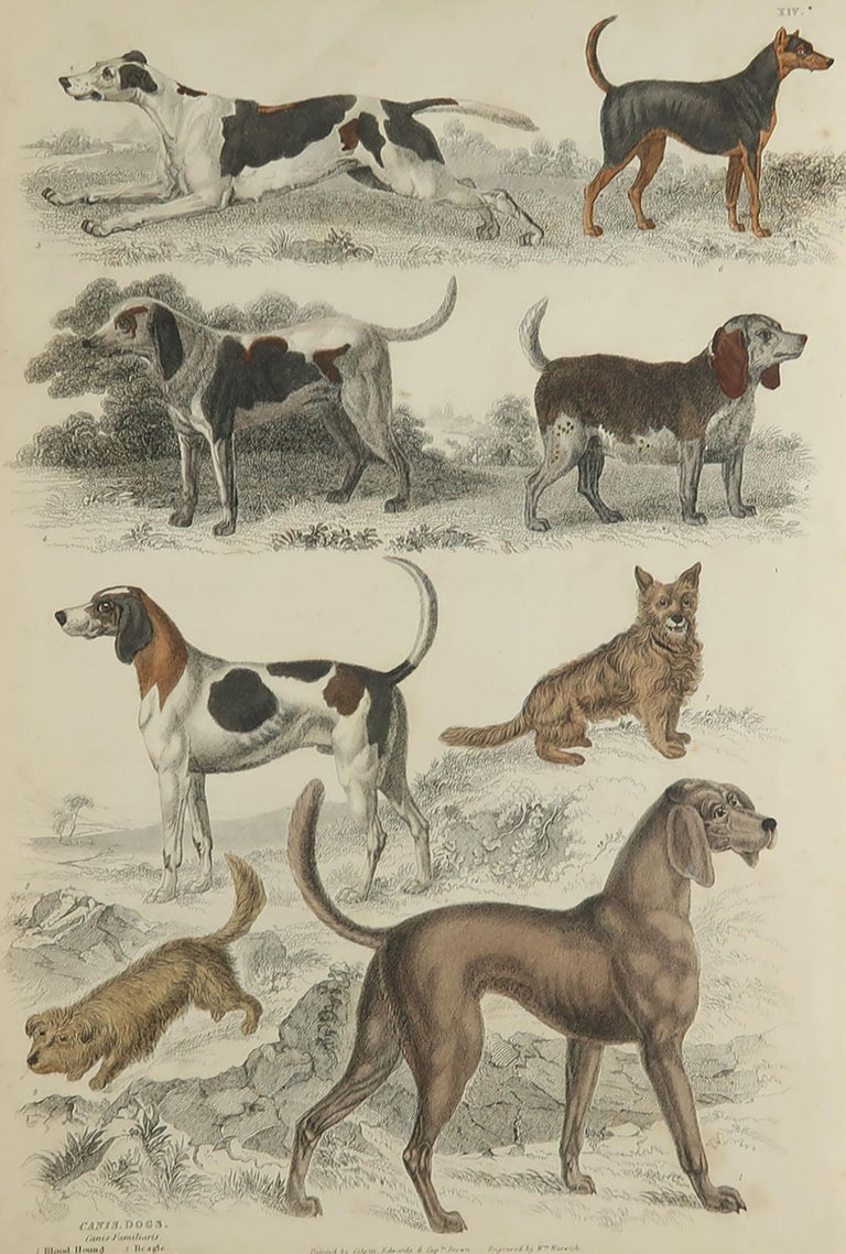 Great image of sporting dogs