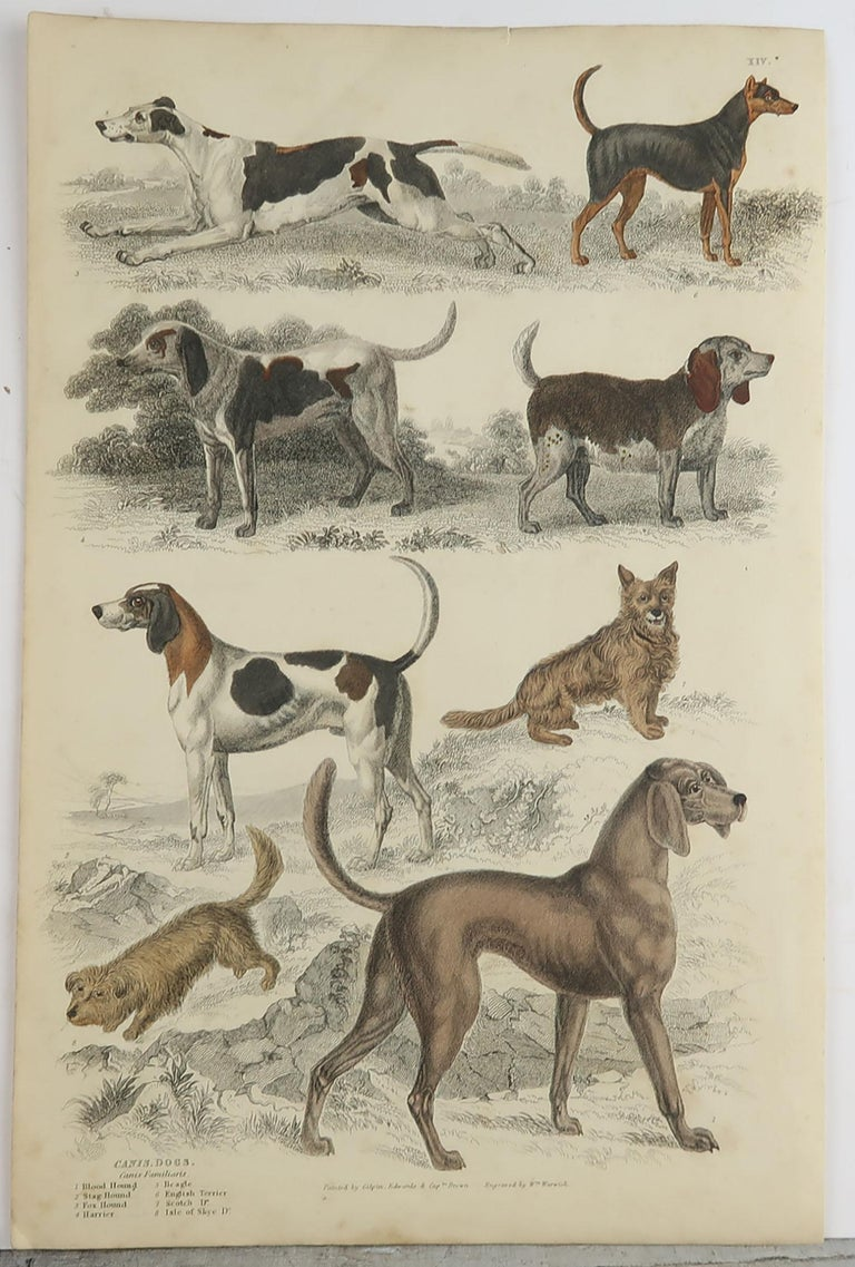 Folk Art Large Original Antique Natural History Print, Dogs, circa 1835 For Sale
