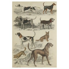 Large Original Antique Natural History Print, Dogs, circa 1835