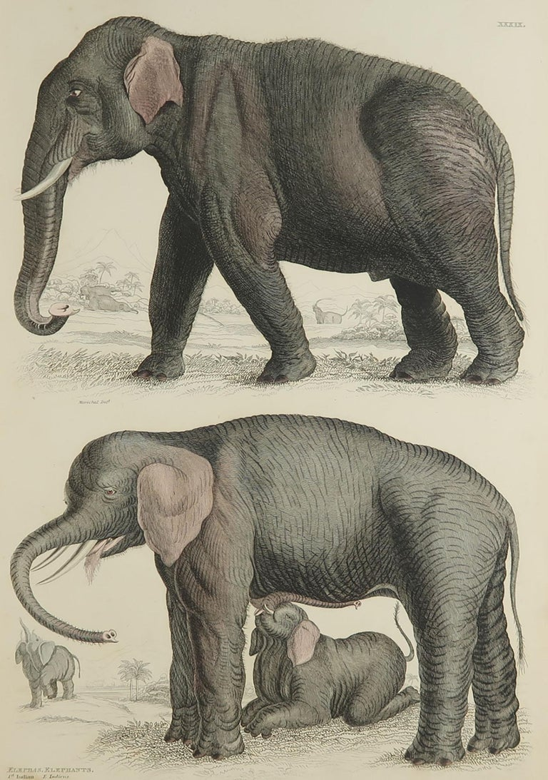 Great image of an Indian and an African elephant
