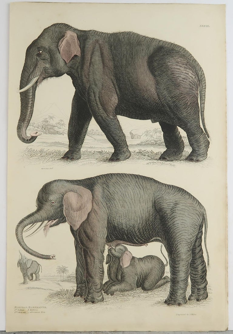 Folk Art Large Original Antique Natural History Print, Elephants, circa 1835 For Sale