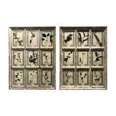 Large Pair of Framed Florentine Dried Botanicals '#1', circa 1905