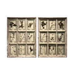 Large Pair of Framed Florentine Dried Botanicals '#2', circa 1905