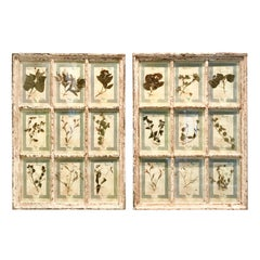 Large Pair of Framed Florentine Dried Botanicals '#3', circa 1905