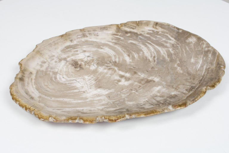 Large petrified wooden plate (or platter) in light colors, smooth sanded and polished on both sides. This organically shaped and ancient object is an unique piece in any home. The beige and off white tones of this plate make this an elegant