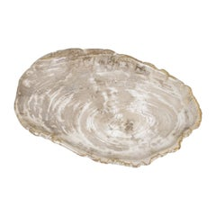Large Petrified Wooden Plate in Beige Tones, Home Accessory of Organic Origin