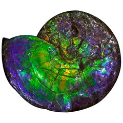 Large Purple and Green Iridescent Ammonite ''A' Grade'