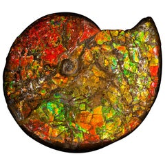 Large Red & Green Iridescent Ammonite from Canada