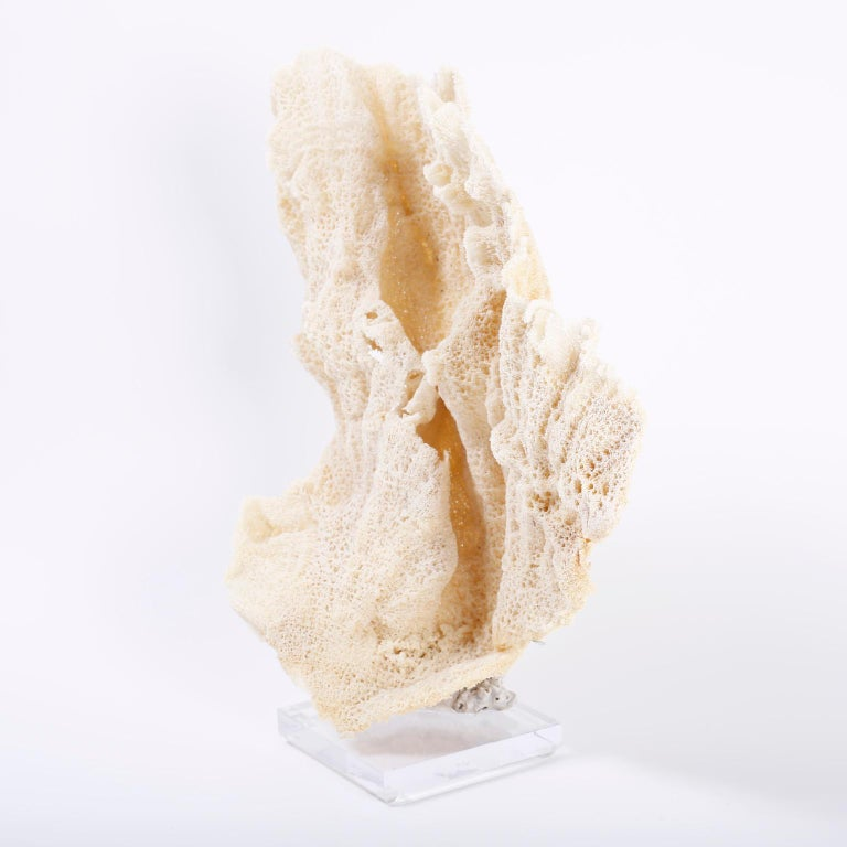 Large Sea Sponge Sculpture on Lucite In Good Condition For Sale In Palm Beach, FL