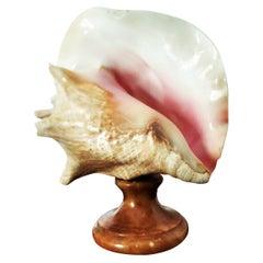 Large Shell With Alabaster Pedestal