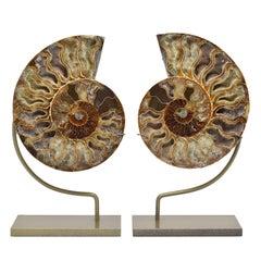 Large Split Ammonite Fossil Set Mineral Specimen Jurassic Cretaceous Period