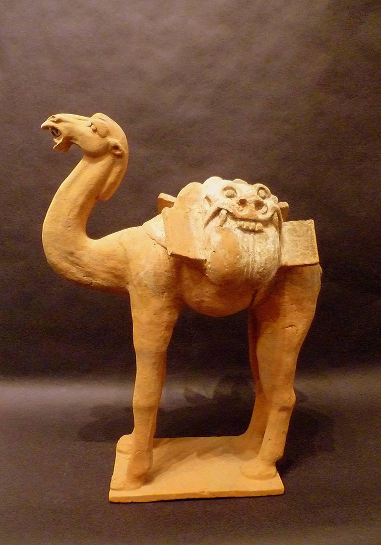 A large superbly and naturalist modeled standing camel, Tang dynasty 618-907, come with Oxford authentication TL test certificate, Oxford test numbers 102s49.