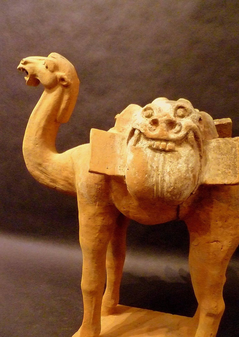 Large Superbly and Naturalistic Modeled Standing Camel, Tang Dynasty TL Tested In Good Condition For Sale In Greenwich, CT