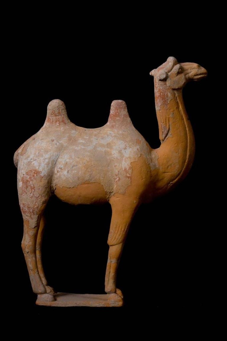 18th Century and Earlier Large Terracotta Standing Camel, Tang Dynasty, China, 618-907 AD For Sale
