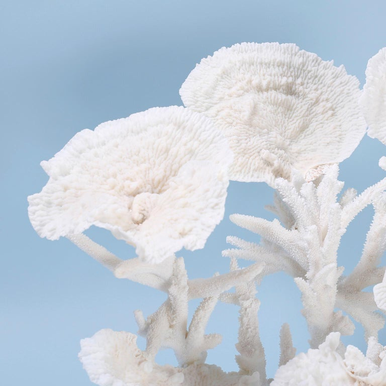 Mid-Century Modern Large White Coral Sculpture For Sale