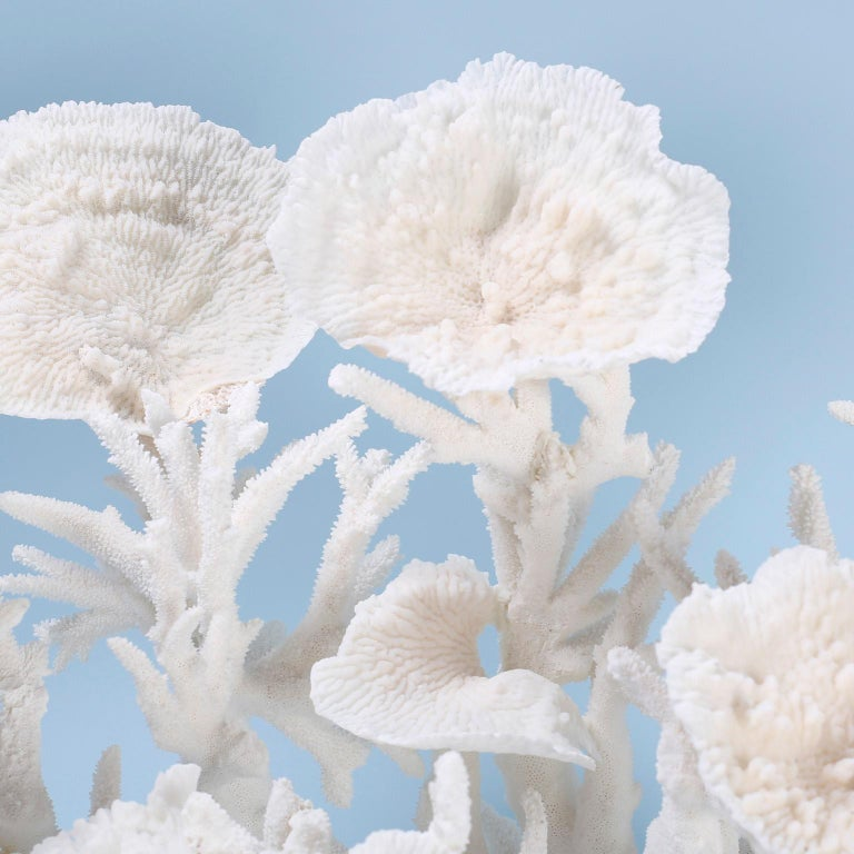 Solomon Islands Large White Coral Sculpture For Sale