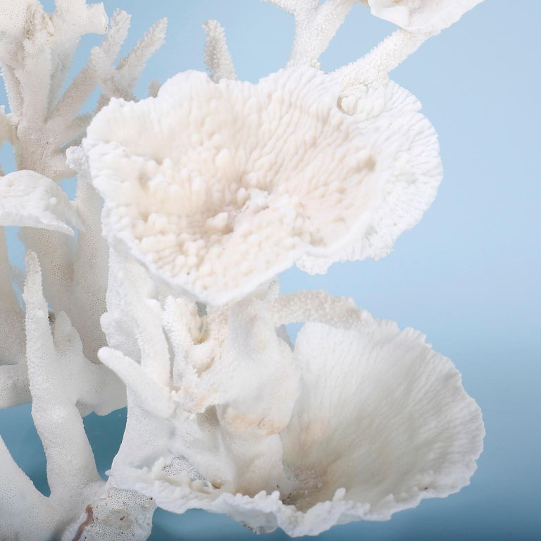 Hand-Crafted Large White Coral Sculpture For Sale