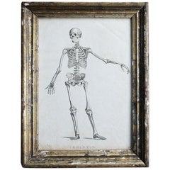 Late 18th Century Engraving Human Skeleton by James Neagle Memento Mori