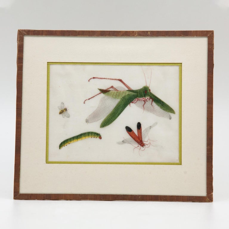Late 19th Century Chinese Paintings of Insects on Rice Paper For Sale 8