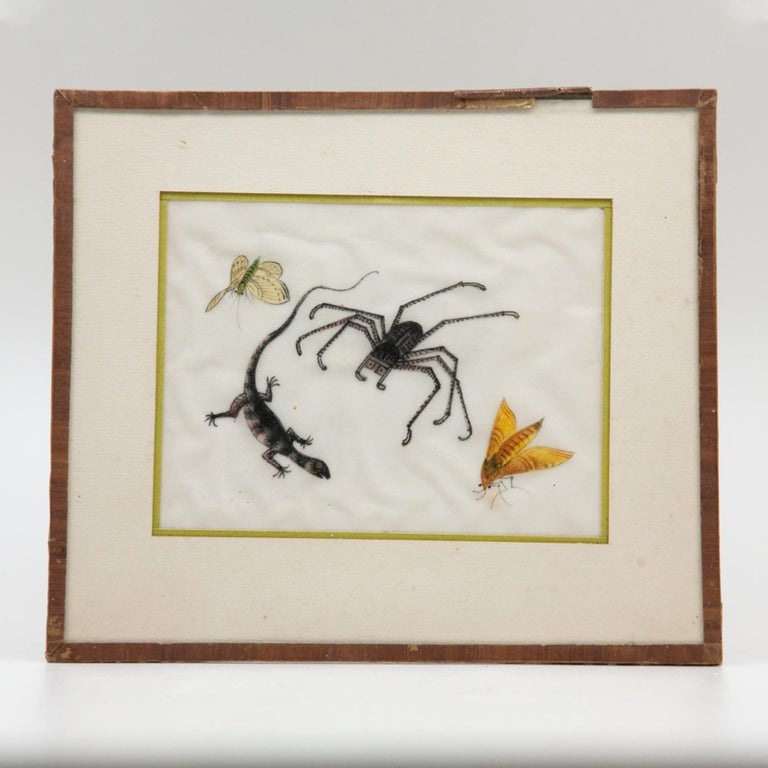 Late 19th Century Chinese Paintings of Insects on Rice Paper For Sale 10