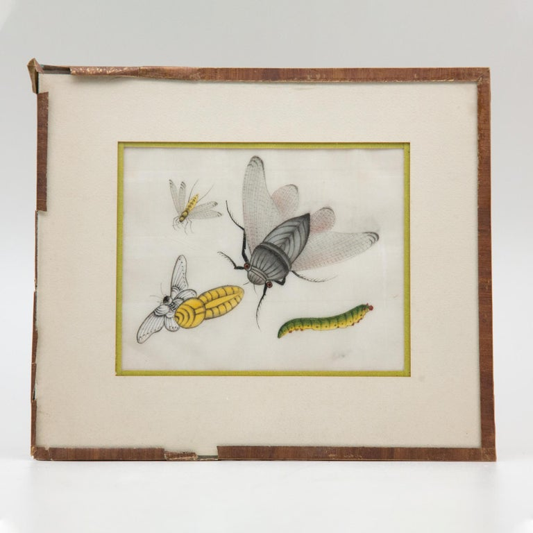 Late 19th Century Chinese Paintings of Insects on Rice Paper For Sale 11