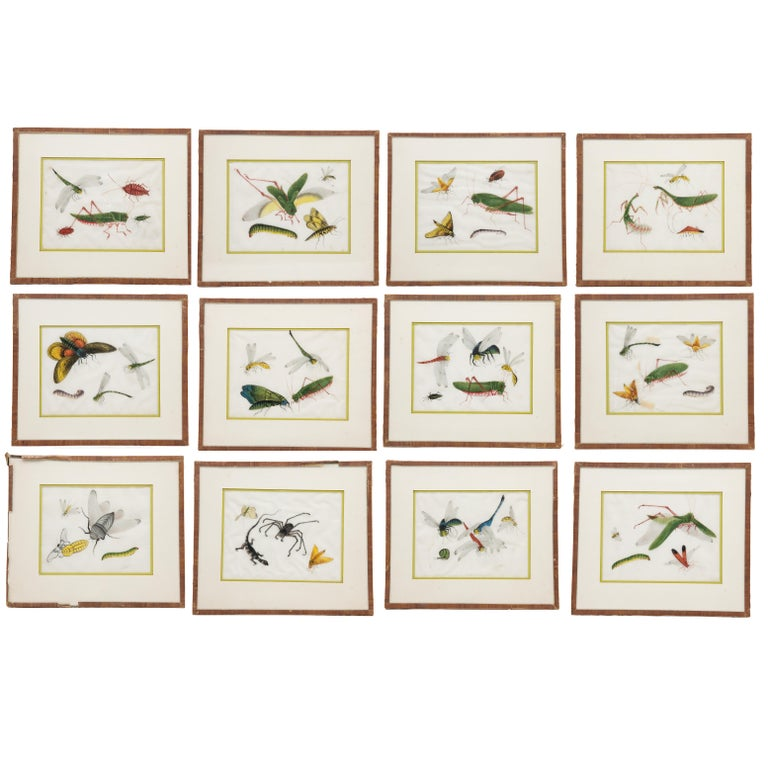 Late 19th Century Chinese Paintings of Insects on Rice Paper For Sale 12