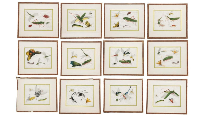 Late 19th century Chinese paintings of insects on rice paper. Twelve unique 9