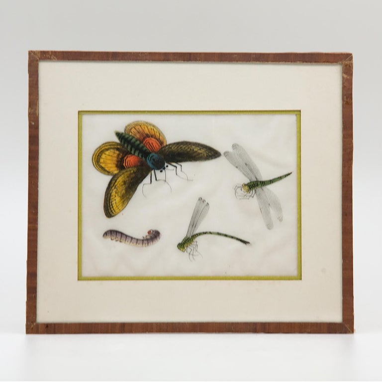 Late 19th Century Chinese Paintings of Insects on Rice Paper In Good Condition For Sale In New York, NY