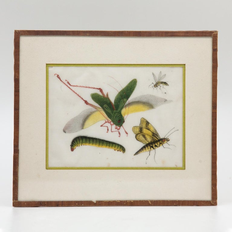 Late 19th Century Chinese Paintings of Insects on Rice Paper For Sale 1