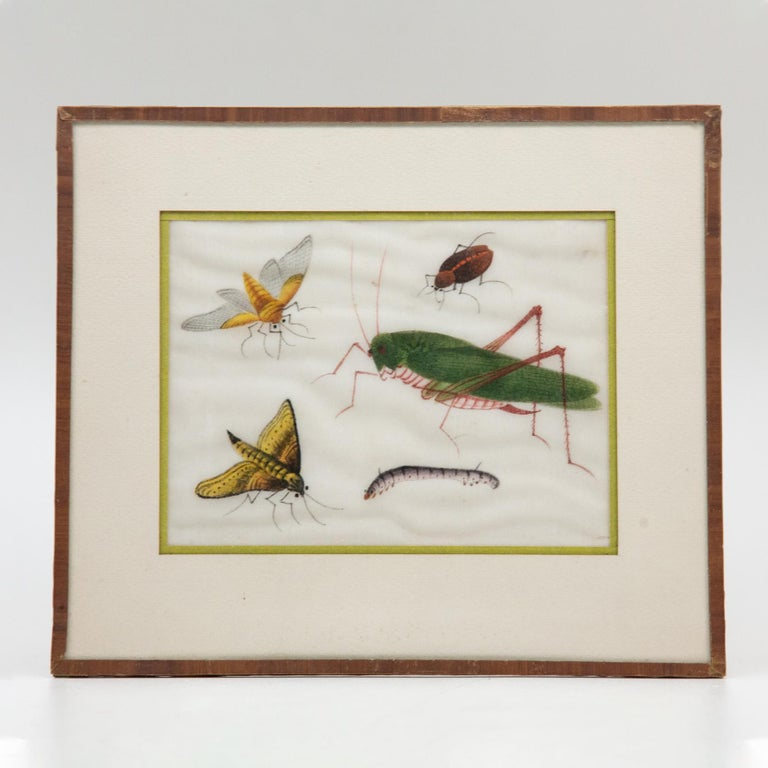 Late 19th Century Chinese Paintings of Insects on Rice Paper For Sale 2